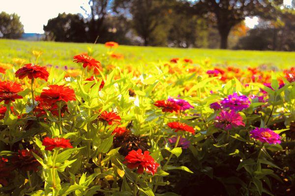 Beautiful garden by the Washington Monument thumbnail
