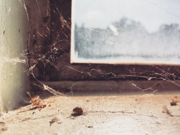 Dead bugs and cobwebs on the window sill. thumbnail