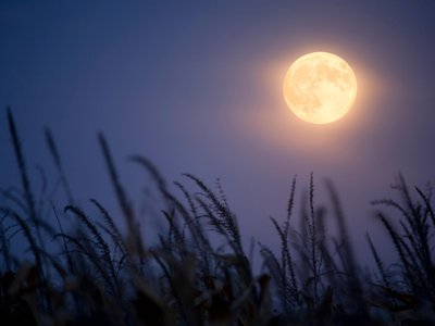 The Harvest moon is the full moon each year that falls closest to the autumnal equinox.