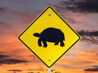 Today the desert tortoise faces a variety of new human-associated threats: off-road vehicle use, the illegal pet trade, and now, an influx of deadly ravens.