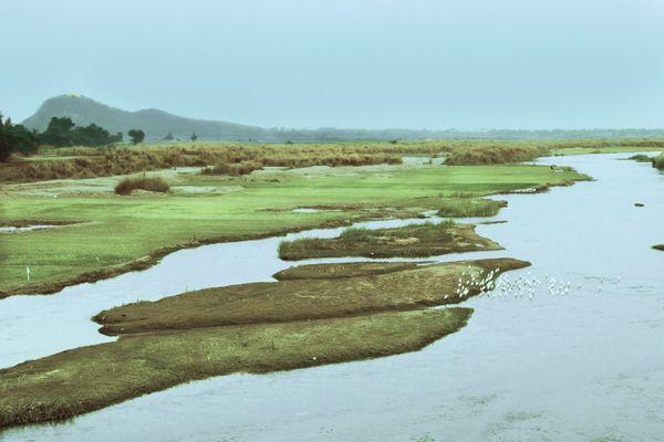 The Green grasslands on stream thumbnail