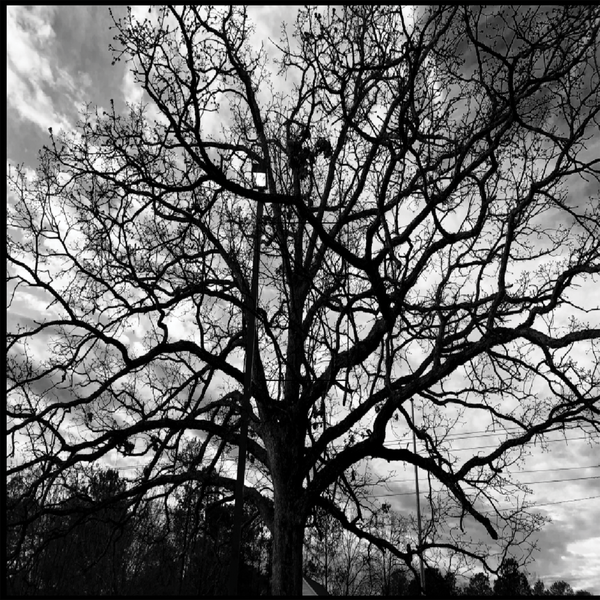Branches In All Directions thumbnail