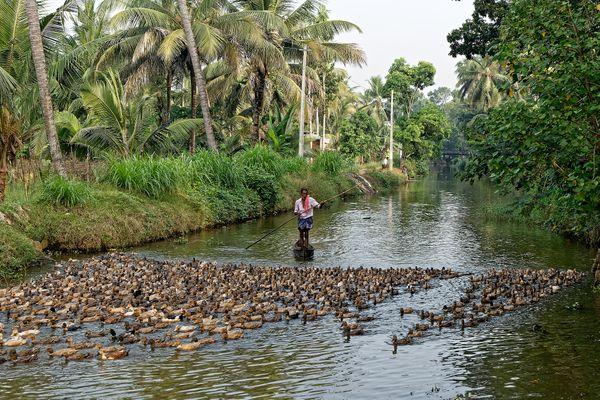 Backwaters of Kerala thumbnail