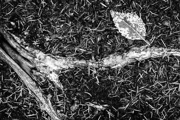 Tree root and leaf in my front yard thumbnail