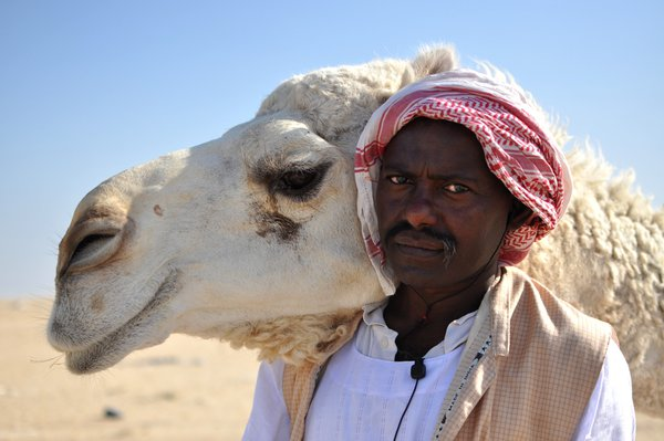 Bedouin man and a camel, Kuwait thumbnail