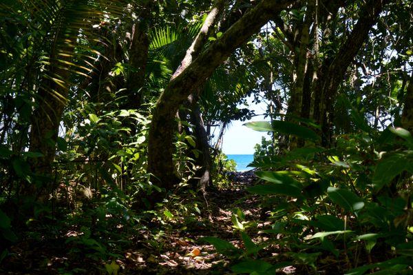 View through the trees thumbnail