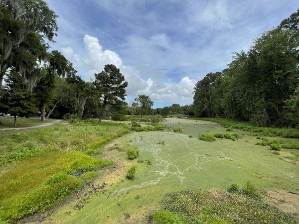 The Cypress Wetlands thumbnail