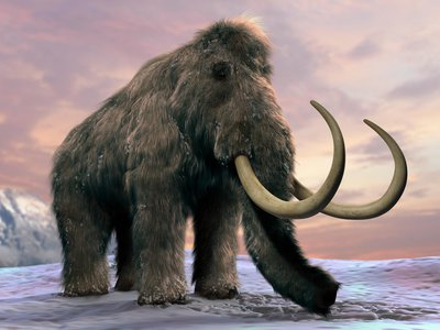Wooly mammoths would have been challenging but desirable prey for early humans.