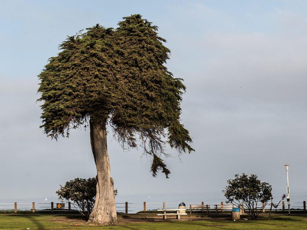 Lorax Tree