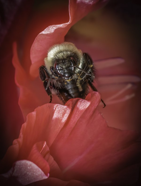 A bee in a flower in Charlotte, North Carolina thumbnail
