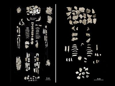 Researchers found the remains of a high-ranking woman (left) and her two twin fetuses (right) in a Bronze Age urn in central Hungary.