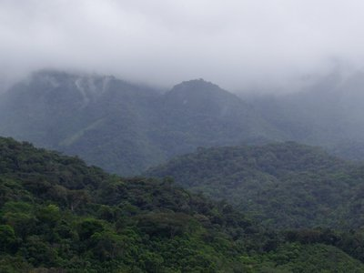 New research estimates that Brazil's Atlantic Forest has regrown 4.2 million hectares of forest since 2000.
