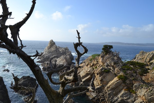 Point Lobos State Natural Reserve thumbnail