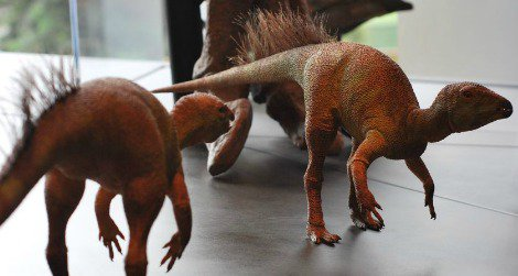 A pair of bristly Fruitadens models on display at the Natural History Museum of Los Angeles