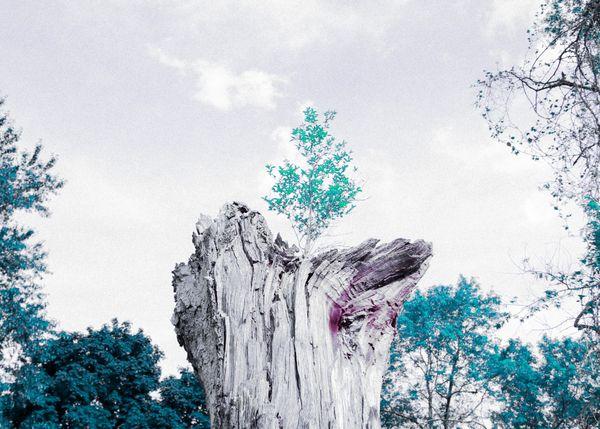 A Tree of Life thumbnail