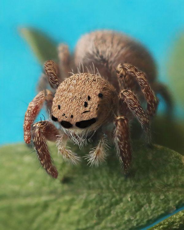 Jumpin' Spider thumbnail