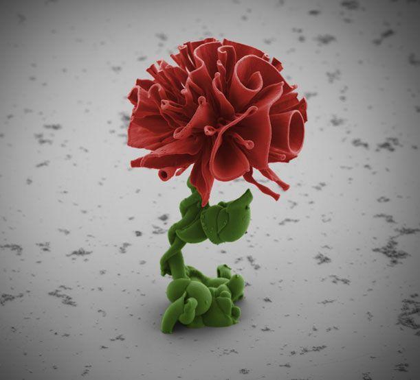 How to Grow a Nanogarden