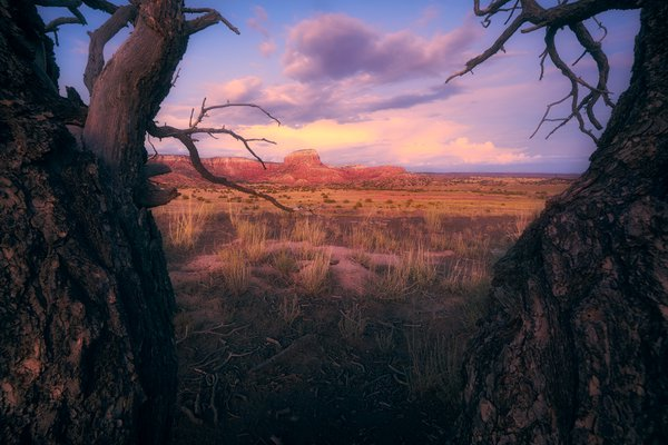 Soft light falling on Orphan Mesa in New Mexico thumbnail