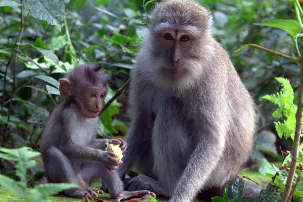 Monkey and chld thumbnail