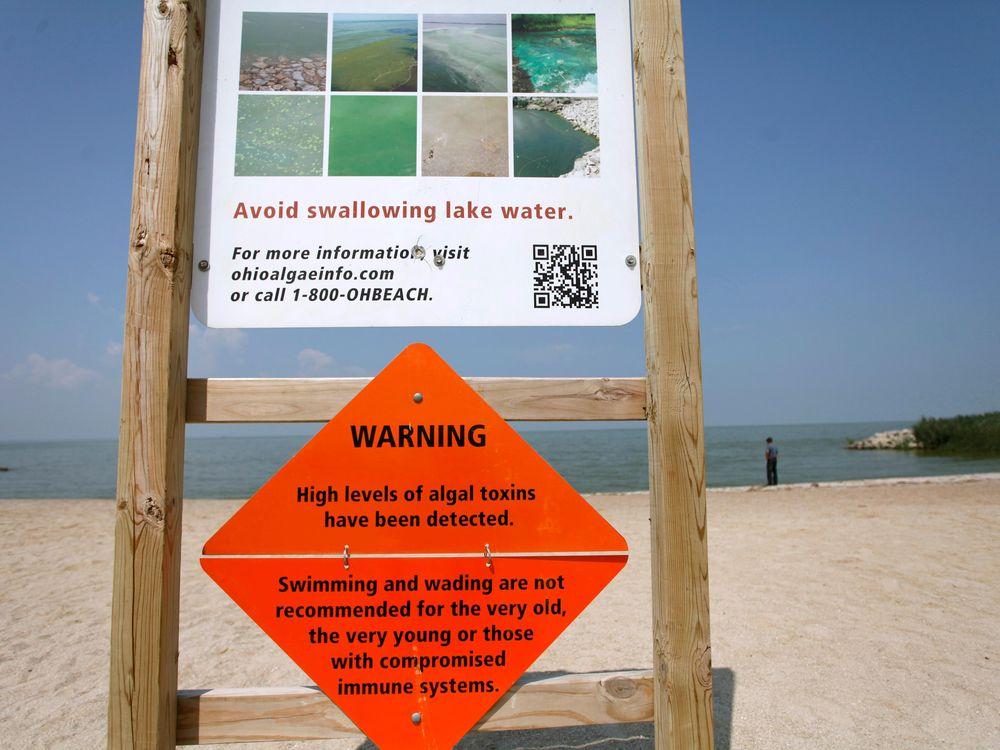 toxic algae bloom