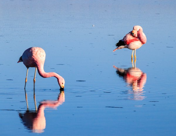 Flamingo duo  thumbnail