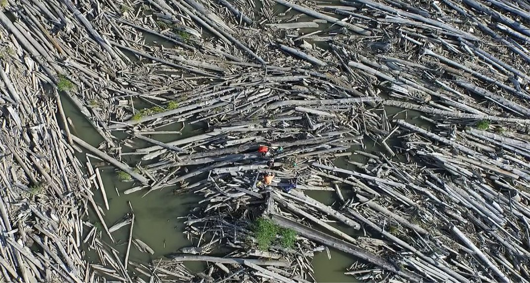 How Driftwood Reshapes Ecosystems