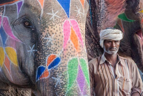 Elephant caretaker thumbnail
