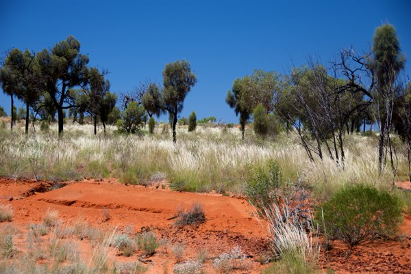 Australian outback near Kings Canyon on a scorching summer's day thumbnail