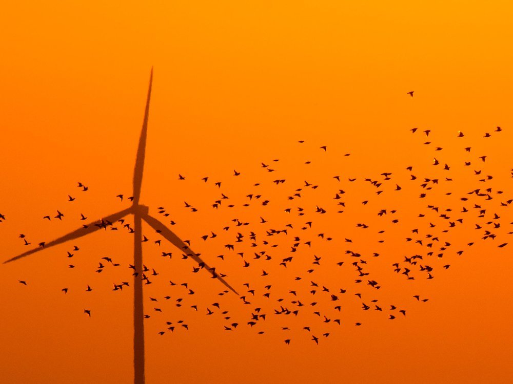 A wind turbine in Germany at dusk in front of an orange sky; a flock of birds are silhouetted in the foreground