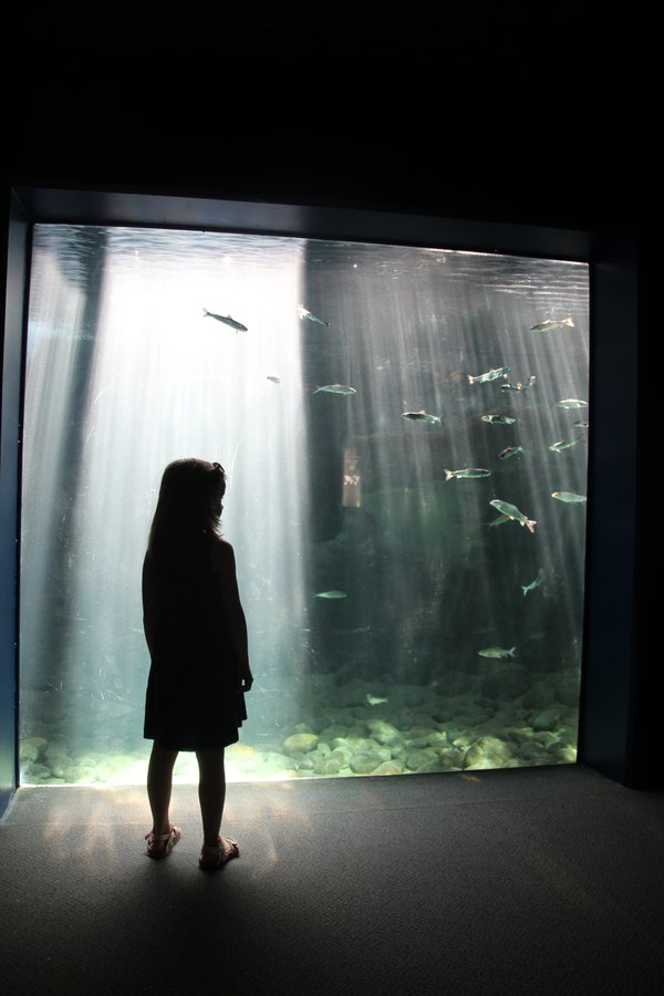 Girl watching salmons in an aquarium thumbnail