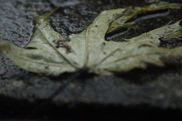 Loose Leaf thumbnail