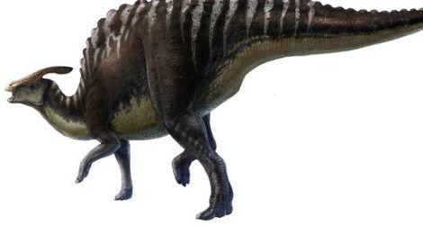 A restoration of Saurolophus angustirostris based upon skeletal and soft-tissue fossils