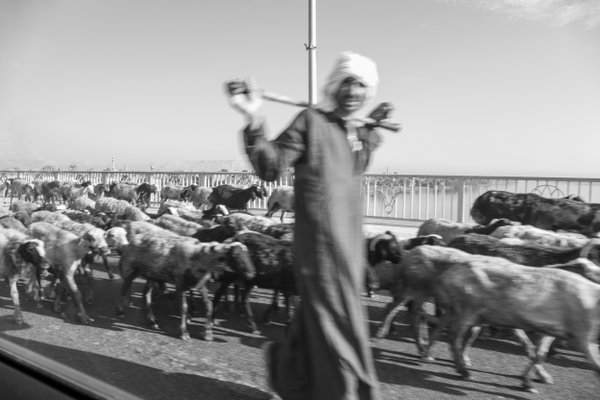 A shepherd on the highway. thumbnail