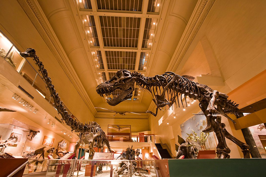 When T. Rex Meets Triceratops in the New Dino Hall, It Will Be a Violent Affair