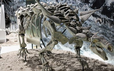 The nodosaur Animantarx. While this dinosaur is from Utah, it represents the sort of dinosaur that made the track found at the Maryland NASA campus.