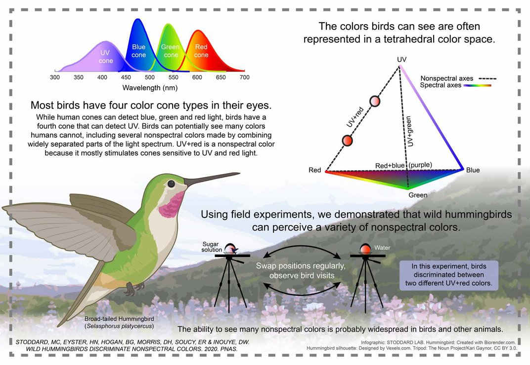 Compared With Hummingbirds, People Are Rather Colorblind