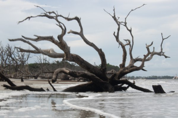 Driftwood at beach thumbnail