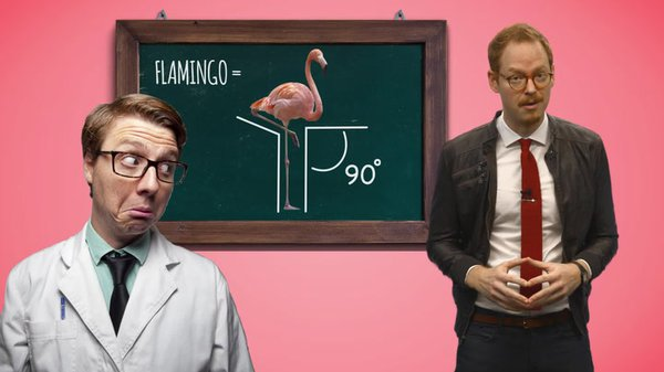Preview thumbnail for Ask Smithsonian: Why Do Flamingos Stand on One Leg?