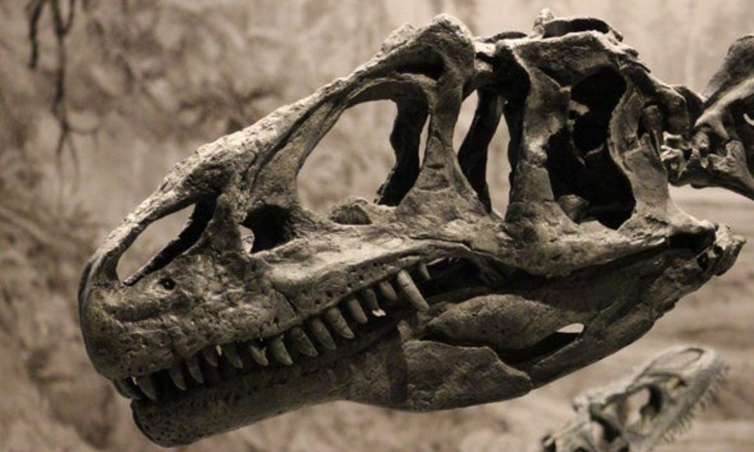 Carnivorous Dinosaurs Like Allosaurus Were Cannibals