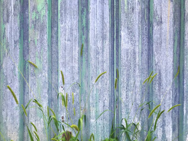 green fence & weeds thumbnail