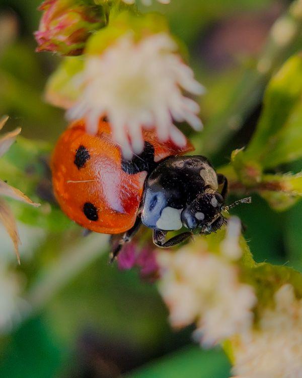 Ladybug on a plant thumbnail