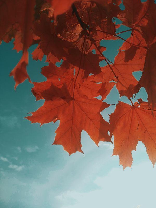 Fall thumbnail