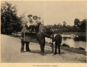 Lions, and Tigers and Bears: The History of the Zoo Goes Digital