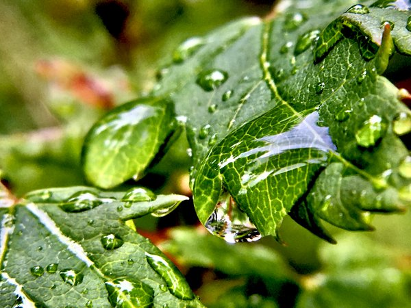 dripping droplets of a rainforest thumbnail