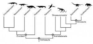20110520083222dinosaur-evolutionary-tree-300x143.jpg