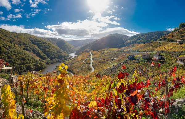 Vineyards. Ribeira Sacra. Galicia. Spain thumbnail