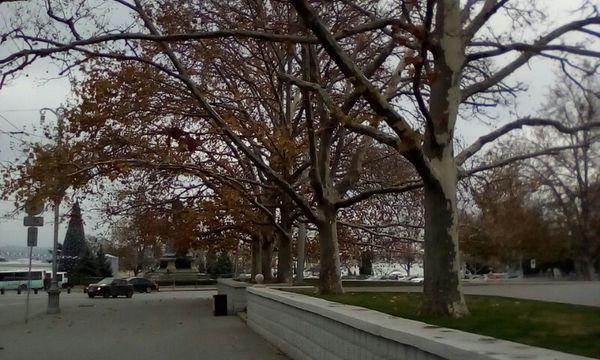 Alley of White Oaks on Nakhimov Square thumbnail