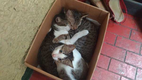 Two cats sleeping and one is wide awake in a cardboard thumbnail
