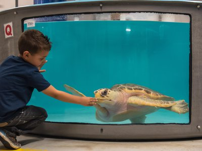The new sea turtle tanks have one-way glass to minimize visitor impact on the animals.