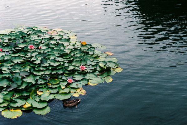 Pond in the garden thumbnail